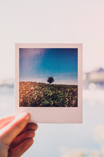 Person holding photo of single tree at daytime
